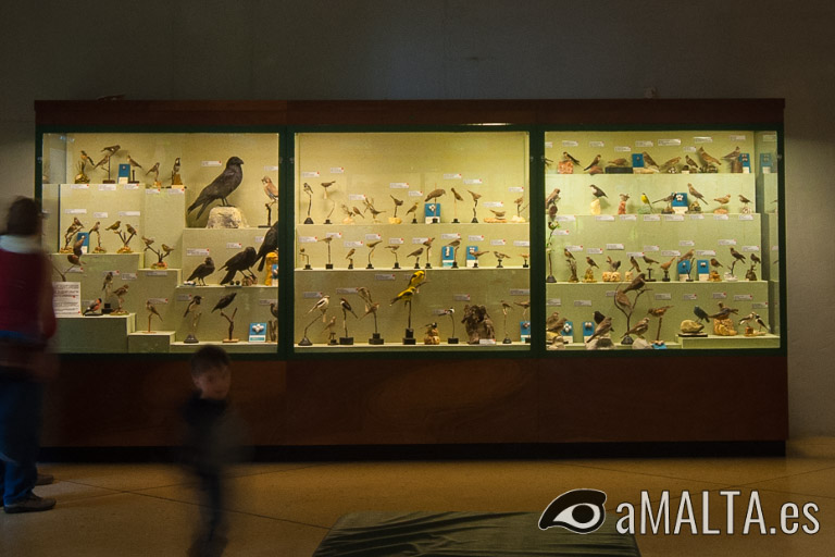 Museo de historia natural de Mdina